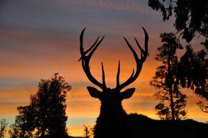 deer-antler-spray-reviews